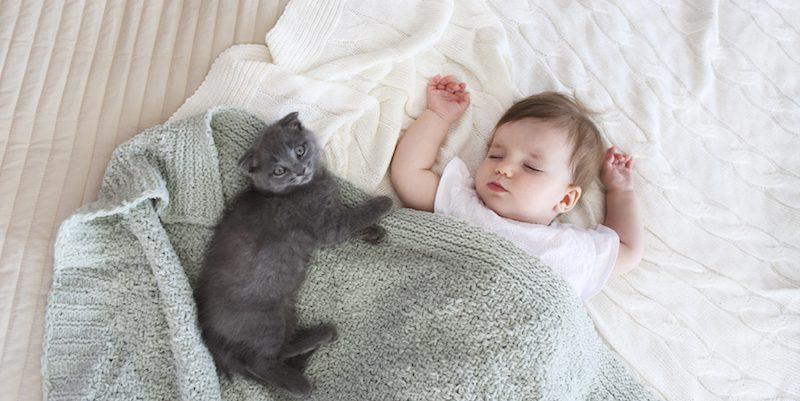 Introducing Your Pet and Newborn